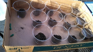 My soil testing cups