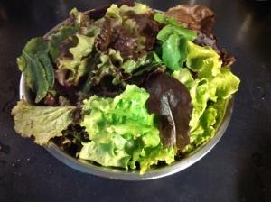Lettuce harvest ~ same week!