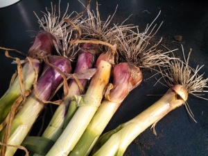 Red Creole onions ~ small bulbs