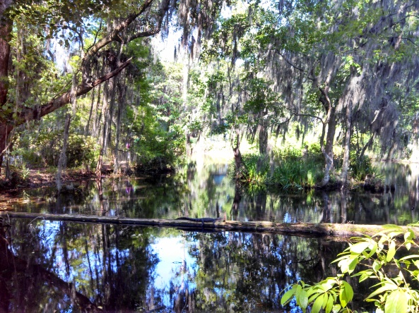 Wildlife at Magnolia Plantation ~ can you see it?