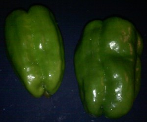 Gold Marconi bell peppers ~ not fully ripe
