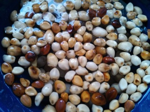 Moonflower seeds soaking