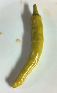 My pepperoncini shaped like a Thai chili pepper