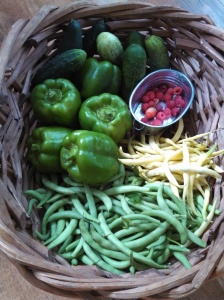 Pickling & green cucumbers, green bell peppers, raspberries, green snap beans, and wax beans harvest