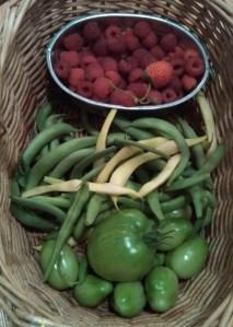 green tomatoes, snap beans, raspberries