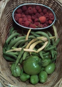 green tomatoes, snap beans, raspberries