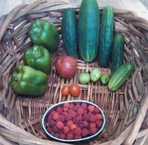 peppers, cucumbers, tomatoes, raspberries