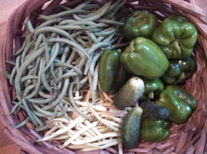 Green bell peppers, green snap beans, wax beans, pickling cucumbers
