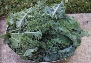 Kale harvest ~ in June!