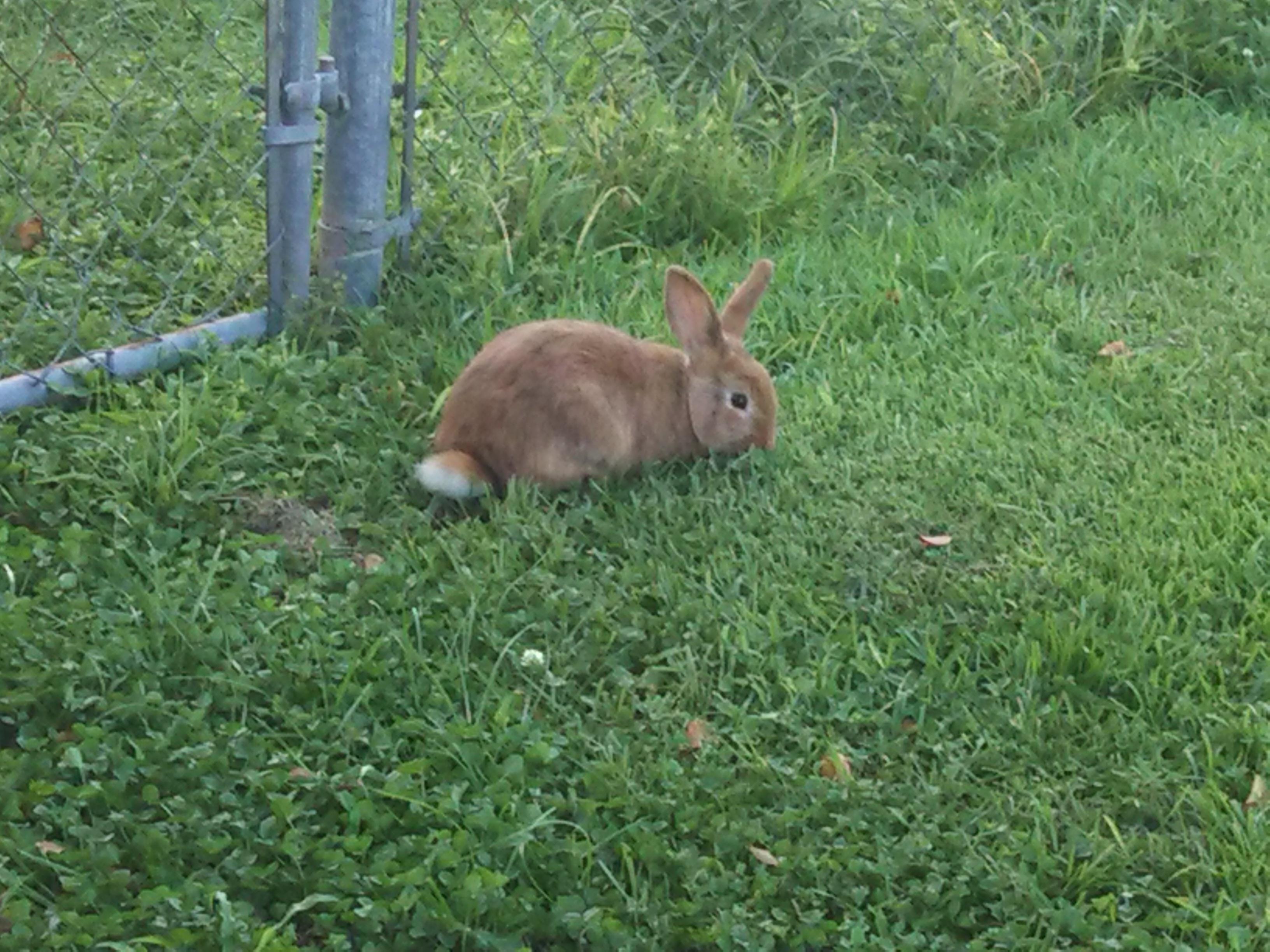 bunny rabbit | Sanctuary Gardener