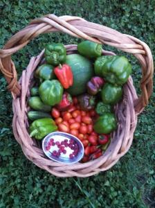 Harvest on July 16