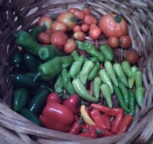 Harvest ~ July 22