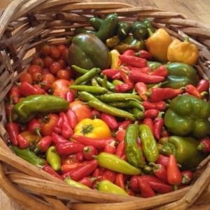 Harvest ~ July 26