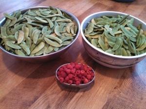 Lima bean & Raspberry harvest ~ June 29, 2013