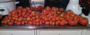 Tomatoes on my counter July 7