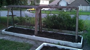 New bed filled with compost & soil, ready for cucumbers