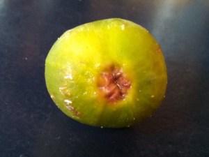 Eye of unripe Celeste fig