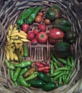 Harvest ~ August 16