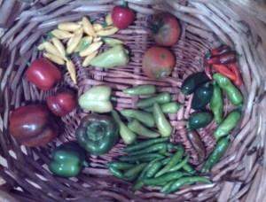 Harvest ~ August 21