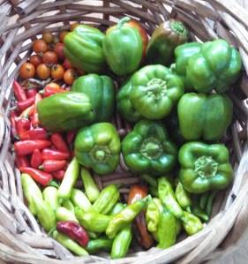 Harvest ~ July 28