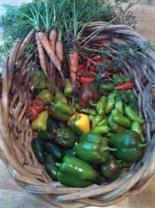 Harvest July 31