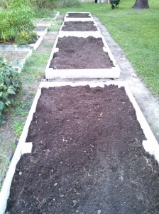 New raised beds filled with loamy soil & compost