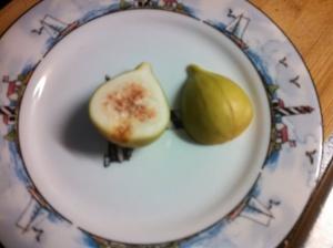 Fig not quite ripe
