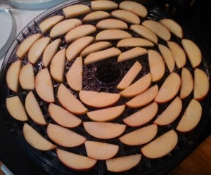 Apples ready to dehydrate