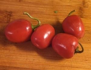 Peruvian Rocoto peppers