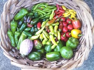 Harvest ~ September 15