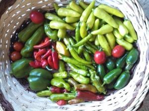 Harvest ~ September 1
