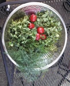 Harvest ~ September 7