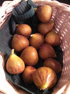 Celeste fig harvest ~ October 13