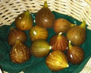 Fig harvest ~ October 1