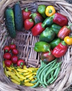 Harvest ~ October 25