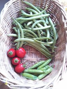 Harvest ~ October 4