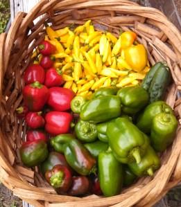 Harvest ~ November 1