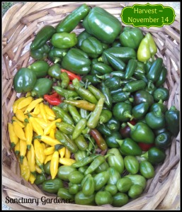 Harvest 14Nov13 SG