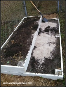 Augmenting asparagus bed with cow manure compost and sand