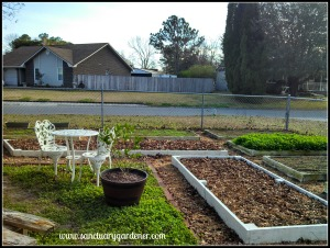 Raised beds ready for winter