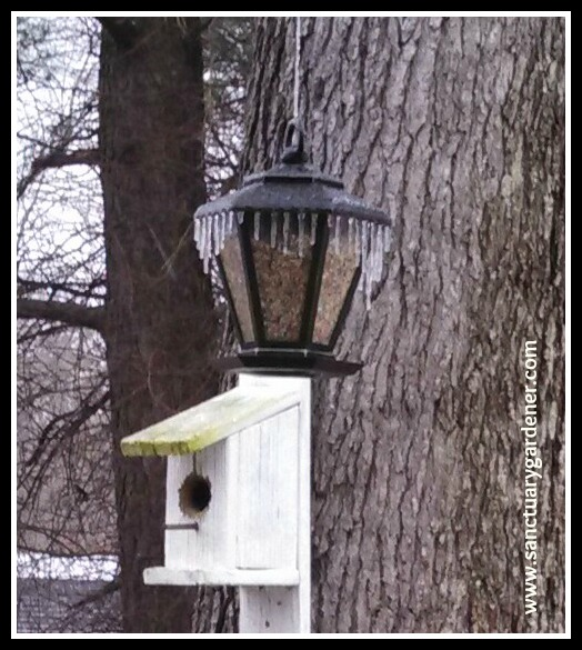 Winter Storm Leon ~ my bird feeder, crowned with icicles