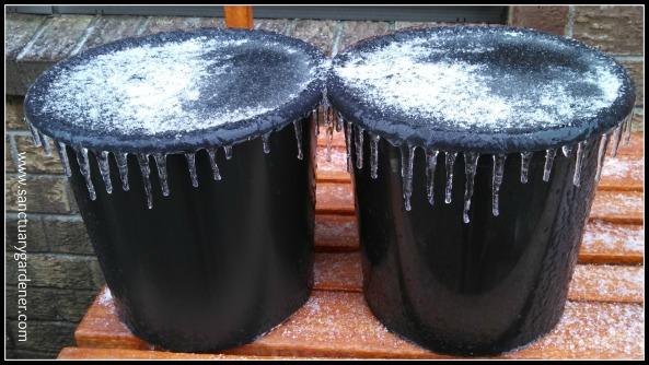 Winter Storm Leon ~ icy garden pots
