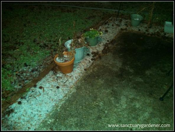 Winter Storm Leon - sleet & snow on my patio - January 29 - 1:00 a.m. - 30 degrees