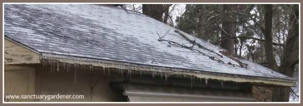 Winter Storm Leon ~ the day after ~ icicles still on my shed