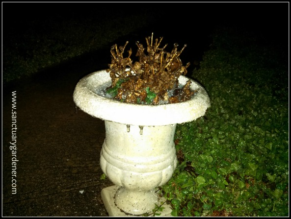 Winter Storm Leon - icicles begin forming on my urn - January 29 - 12:02 a.m. - 31 degrees