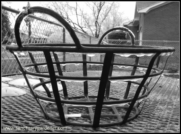 Winter Storm Pax ~ Ice on my basket