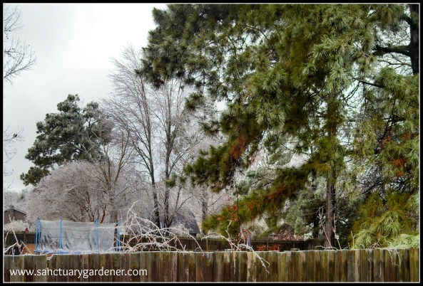 Winter Storm Pax ~ Over the fence beyond my compost bin