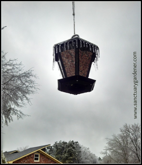 Winter Storm Pax ~ Icicles on the bird feeder