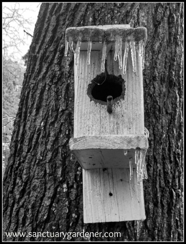 Winter Storm Pax ~ Birdhouse (hole chewed on by squirrel!)