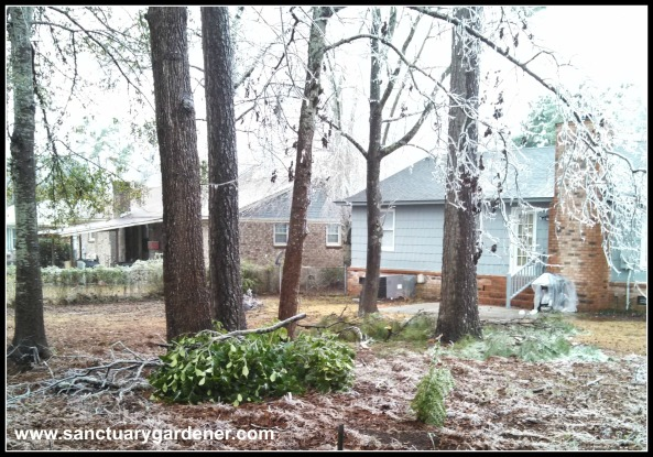 Winter Storm Pax ~ Limbs down in my neighbor's yard (the one with the chickens)